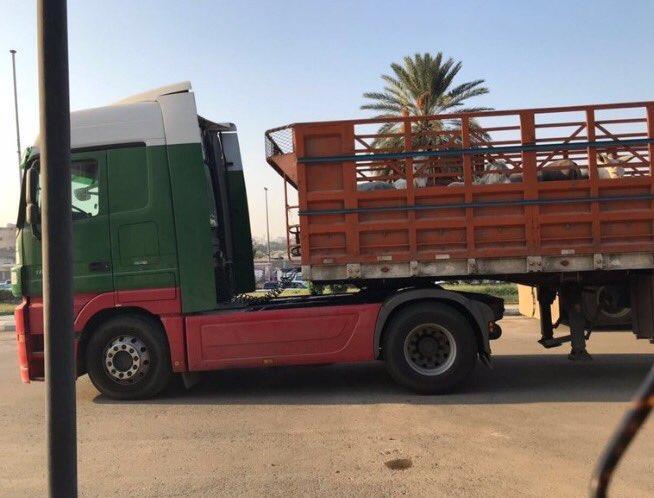 ضبط شاحنة محملة بالحمير