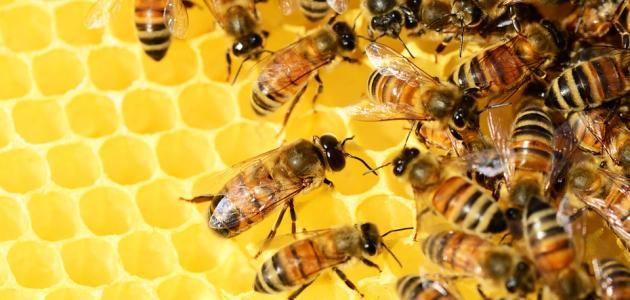 بيع العسل