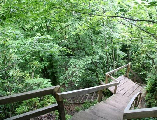 غابة يوروز كينت
