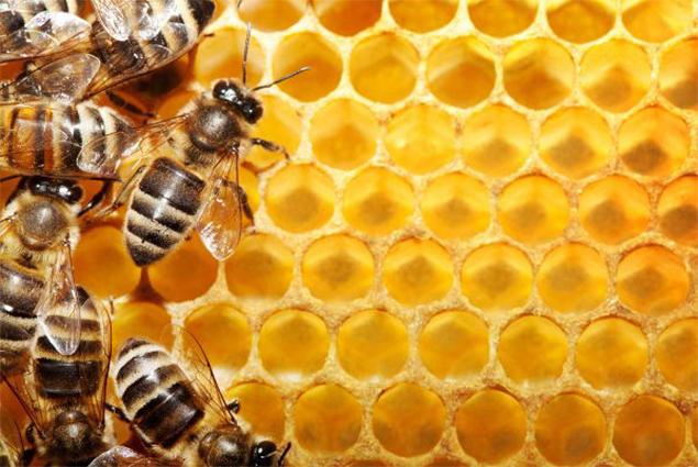 افضل محل يبيع عسل اصلي