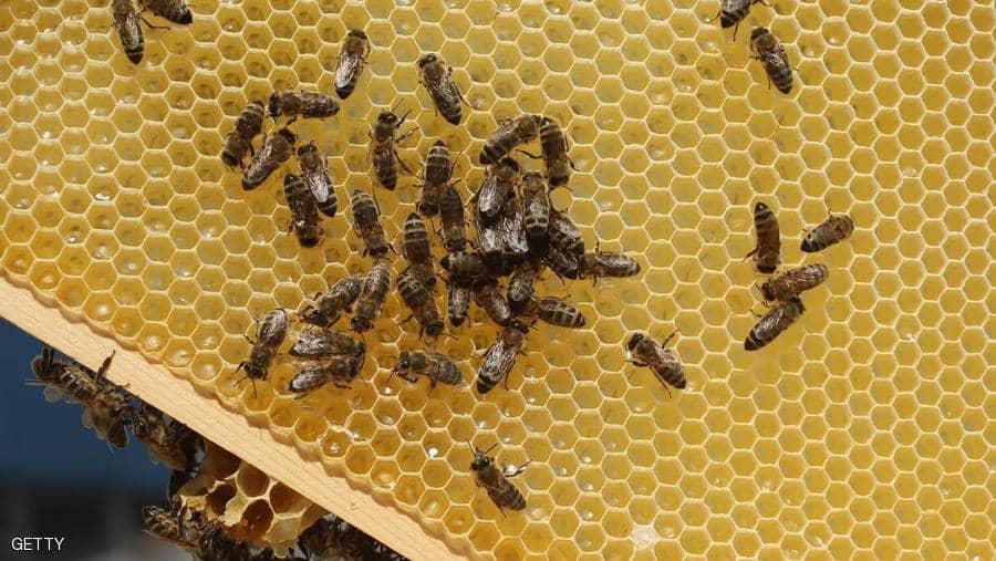 مشروع بيع العسل