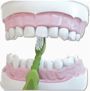 الخطوة 4 تنظيف الاسنان للاطفال