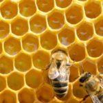 مناحل العسل في تركيا