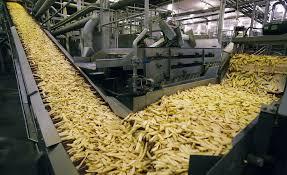 دراسة جدوى مشروع مصنع بطاطس نصف مقلية