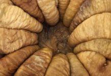 أأفضل أنواع التين المجفف التركيفضل أنواع التين المجفف التركي