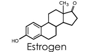 ما هو هرمون الاستروجين