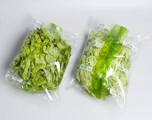دراسة جدوى مصنع تجهيز وتجميد الخضروات